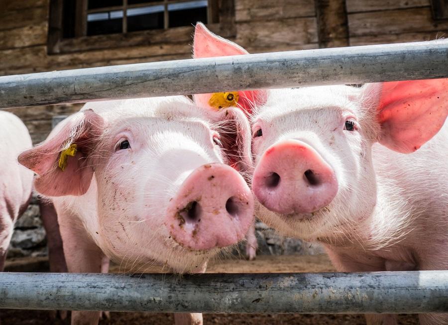 Mit kell tudni az állati hullakezelésről?