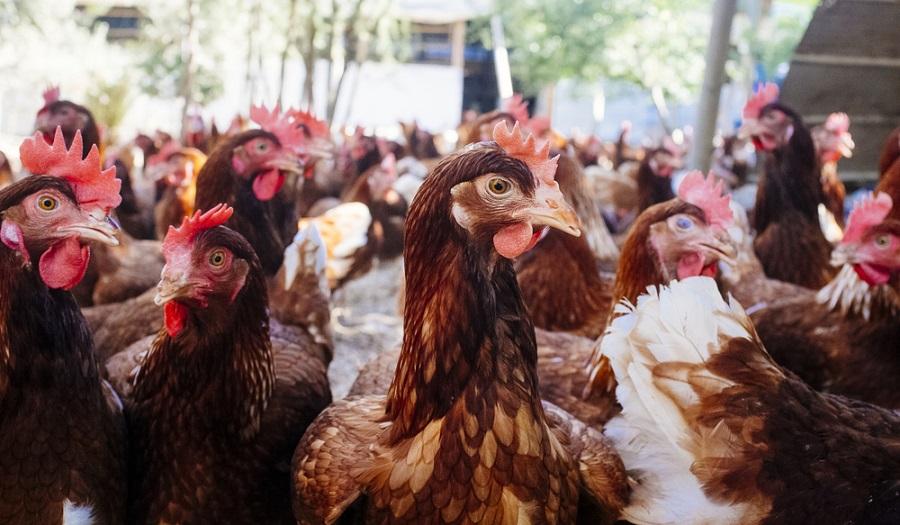 Miért oldja meg az állati hullaégetést a telephelyen belül?